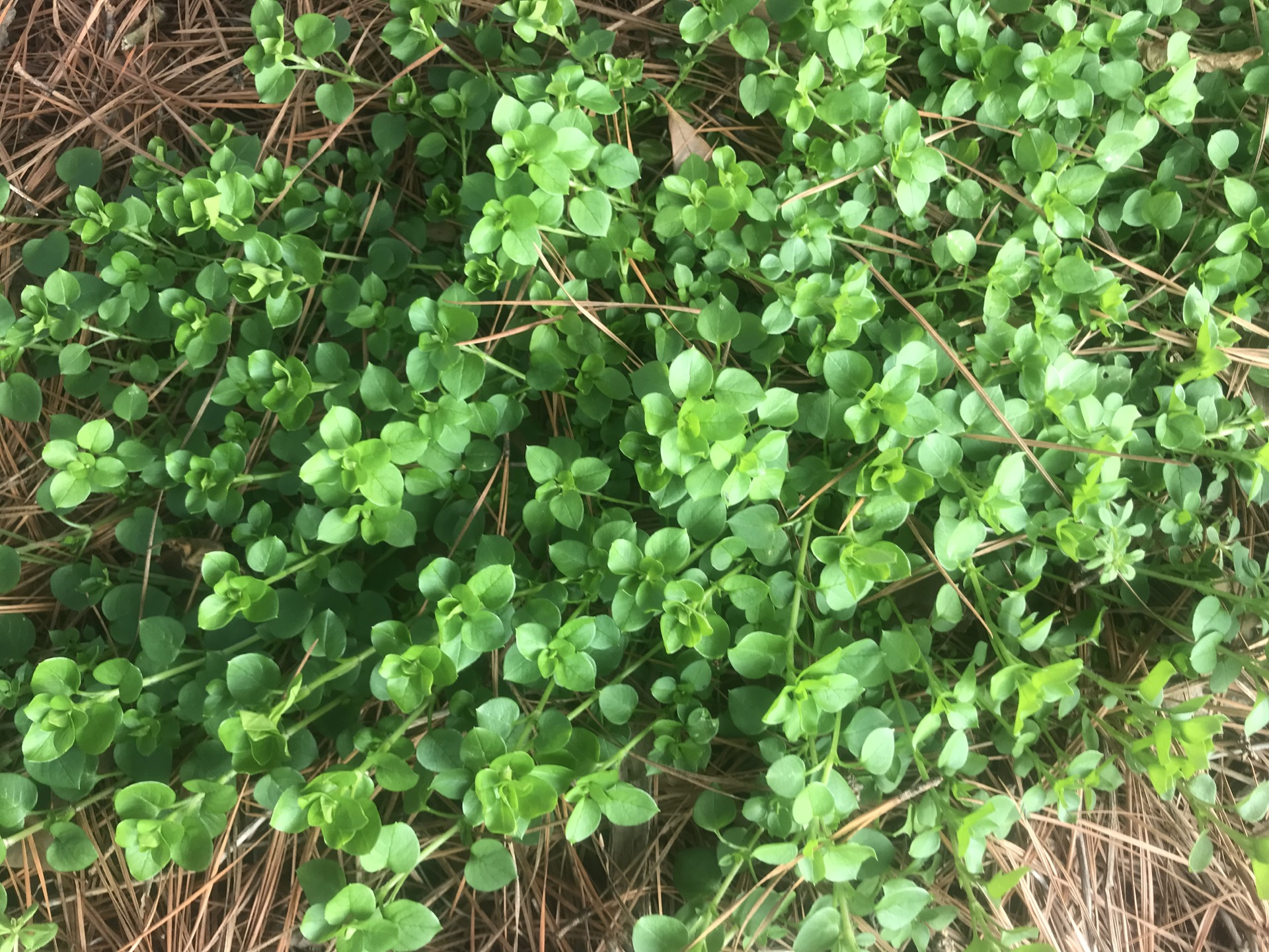 How To Stop Spring Weeds With Pre Emergent And Post Enviro Care
